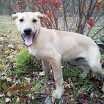 PawSafe Animal Rescue's photo